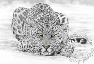 Leopard w